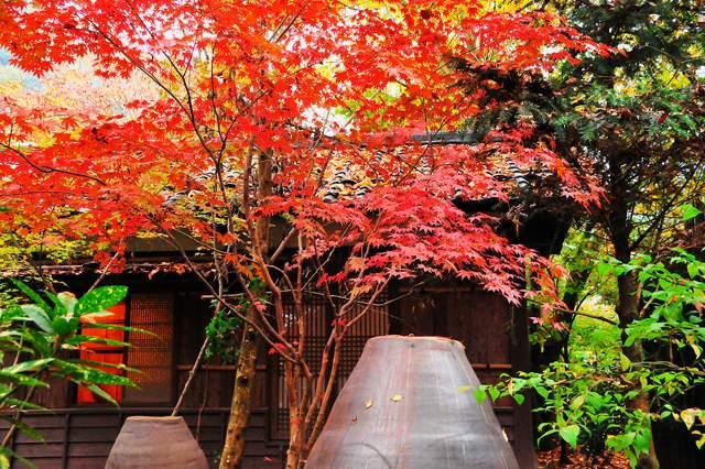 大自然で紅葉もキレイ