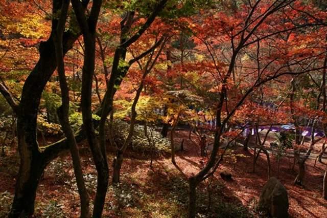 秋は紅葉がきれいです