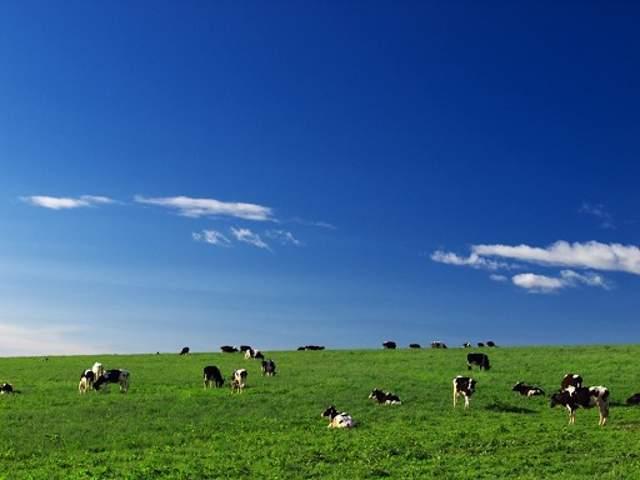ザ・北海道の牧場もあります!
